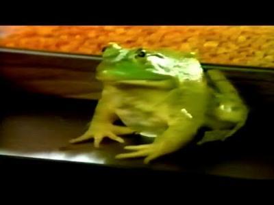 Apple II featuring Jenifer Graham – Frog (1987)